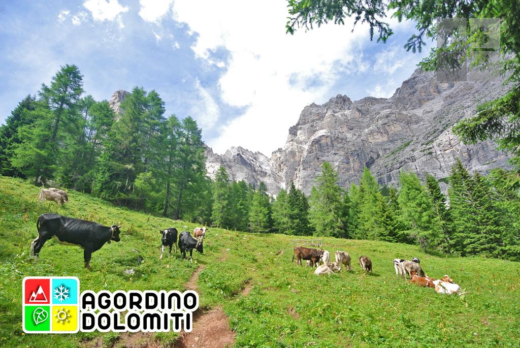 sentiero_geologico_agordo_agordino_dolomiti (42)