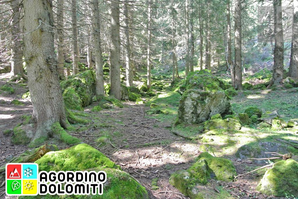 Foresta Demaniale Regionale di Malgonera