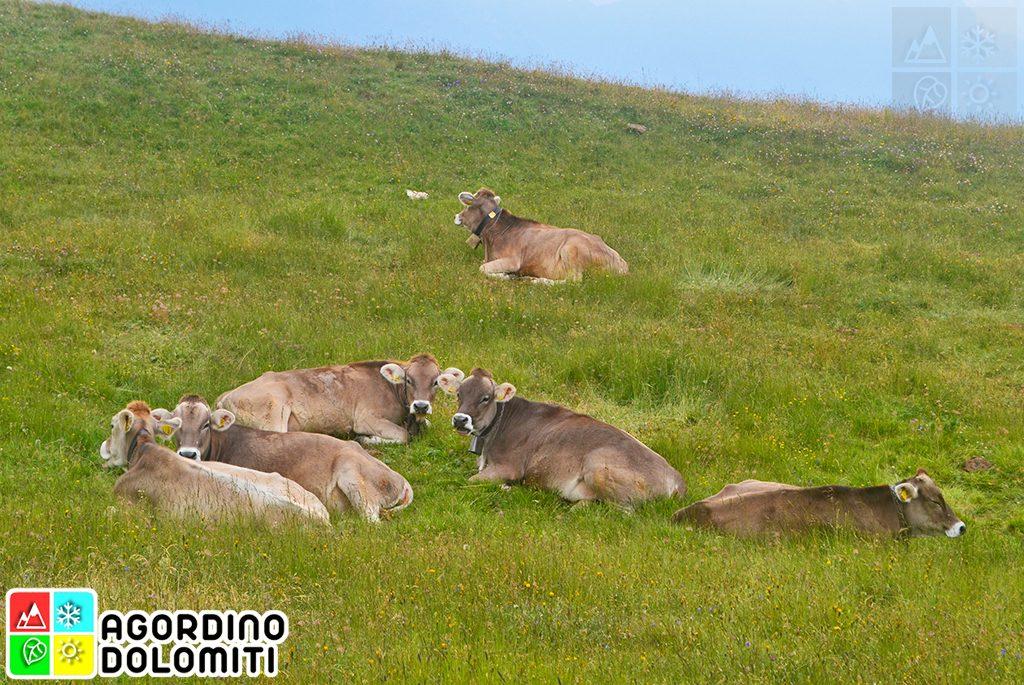 Natura in Agordino, Cuore delle Dolomiti