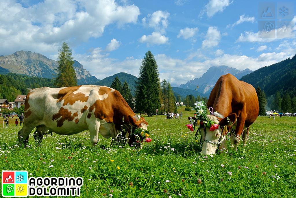 La Piana di Falcade Dolomiti
