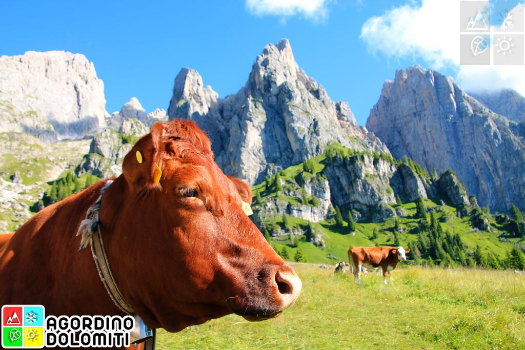 Croda Granda in the Pala Group | Hikes in the Heart of the Dolomites | Agordino Dolomites