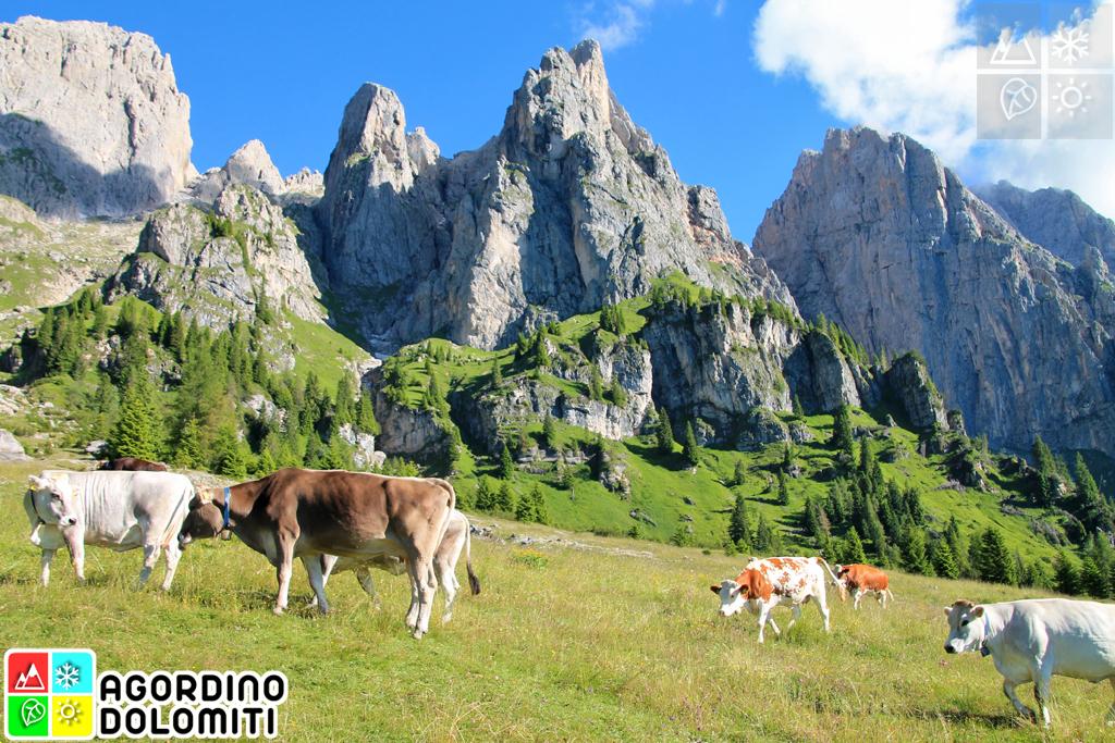 Gosaldo, Agordino, Dolomiti