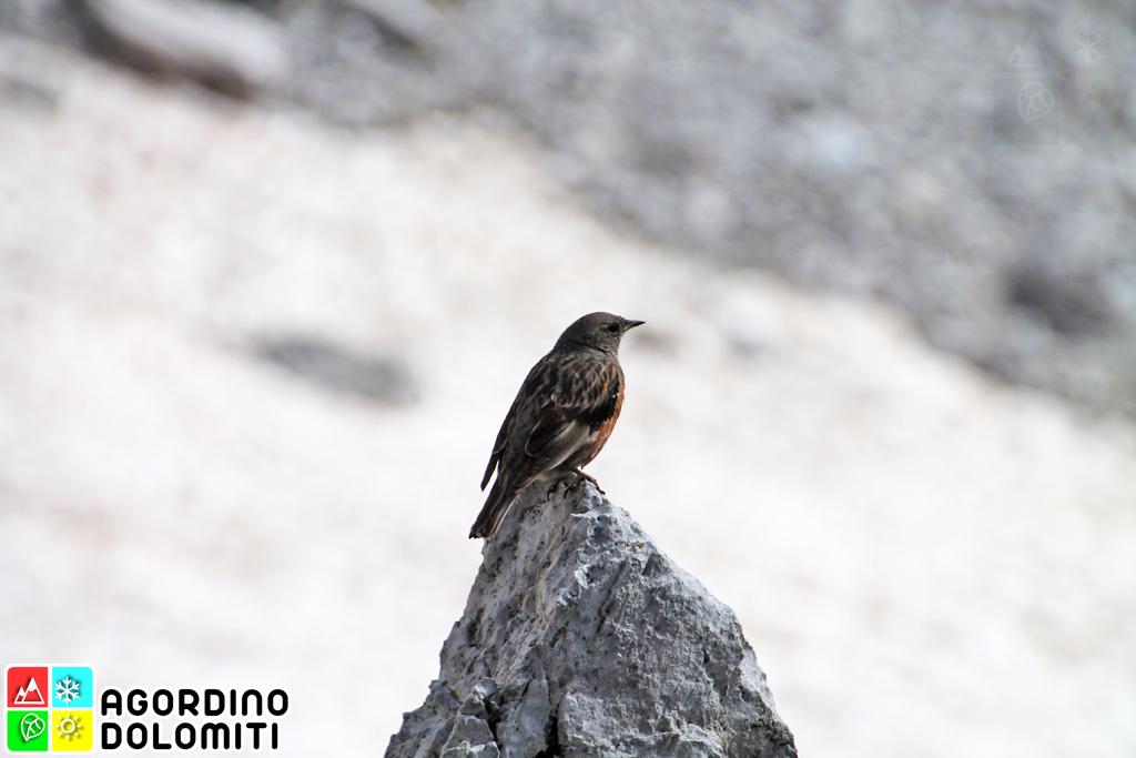 Natura in Agordino