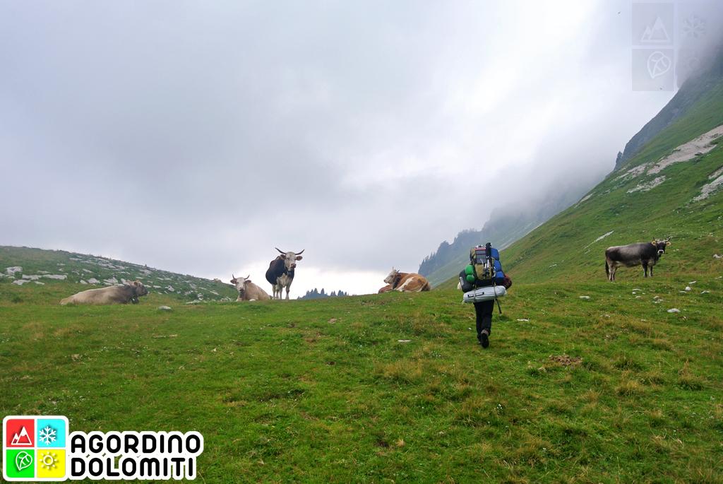 Sentiero Tilman da Falcade ad Asiago